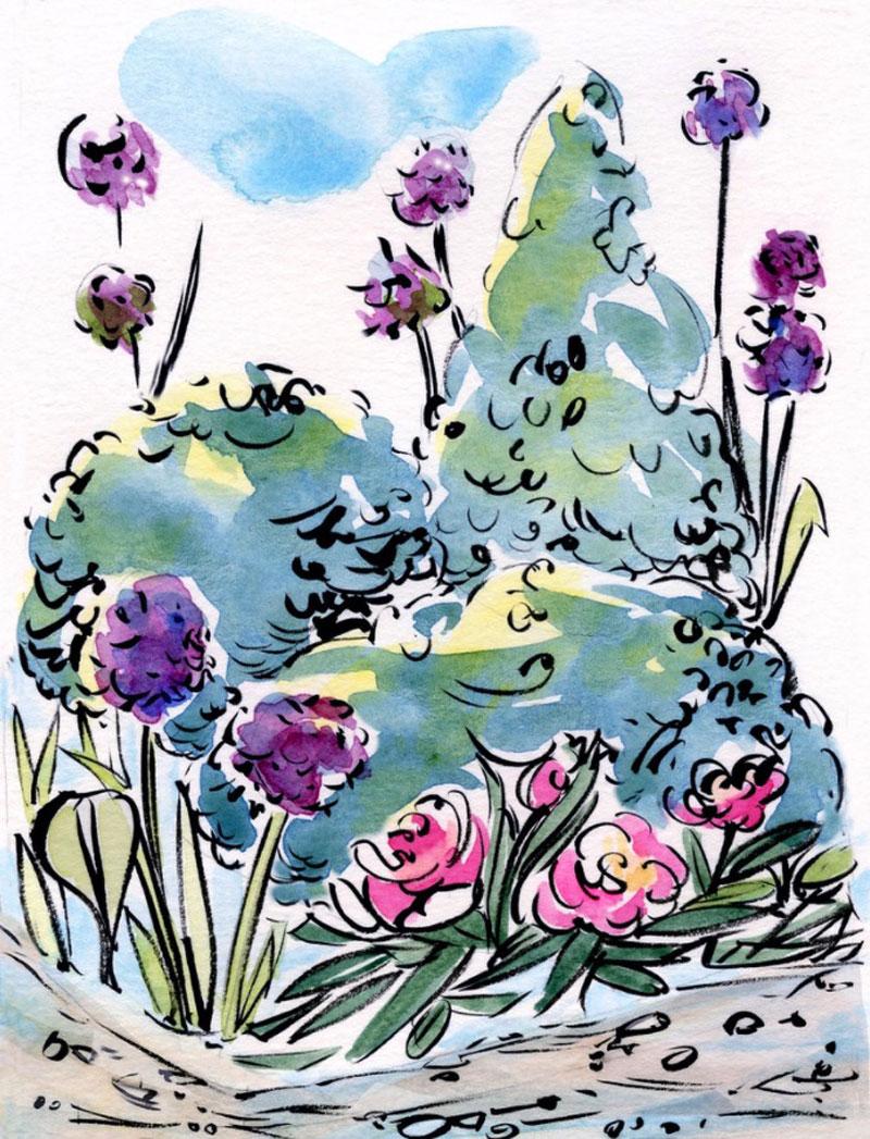 CSD garden sketches